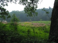 Blue Owl Hollow meadow in summer